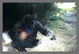 pic10_gorilla_busch.jpg